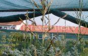 bezkolenec rákosovitý Skyracer - Molinia litoralis Skyracer